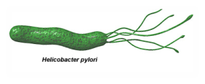helicobacter1